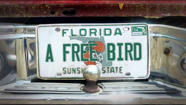 A Free Bird on FREECABLE TV